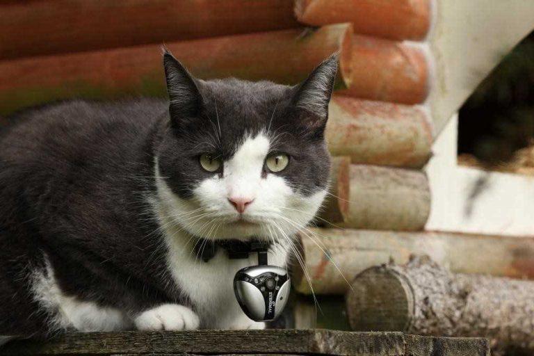 Un investigador le colocó camaras a los gatos domésticos para ver cómo se comportan cuando su humano no está cerca.