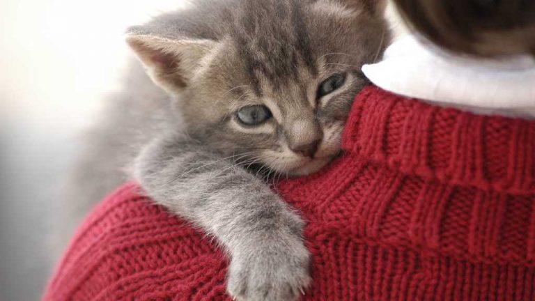 Hablemos de nombres de gatos y cómo ponerle nombre al suyo