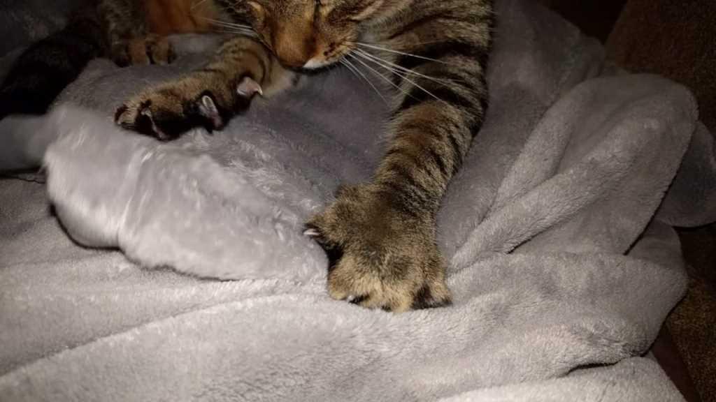los gatos amasan 2