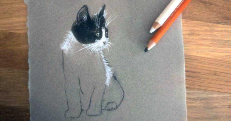 Imágenes de gatos para dibujar