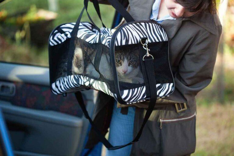 Cómo preparar a su gato para viajar en un transportador