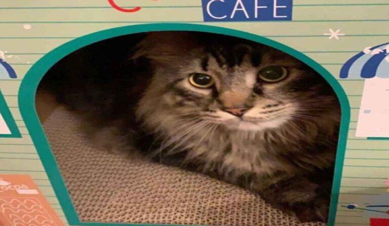 Los efectos de la CBD sobre la ansiedad en Biggie the Cat, un estudio residencial