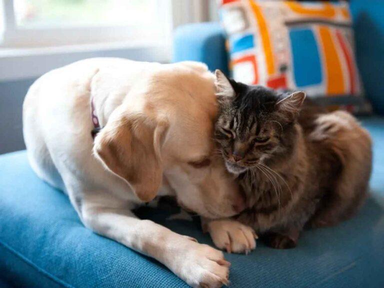 3 razones principales por las que los gatos son mejores mascotas que los perros