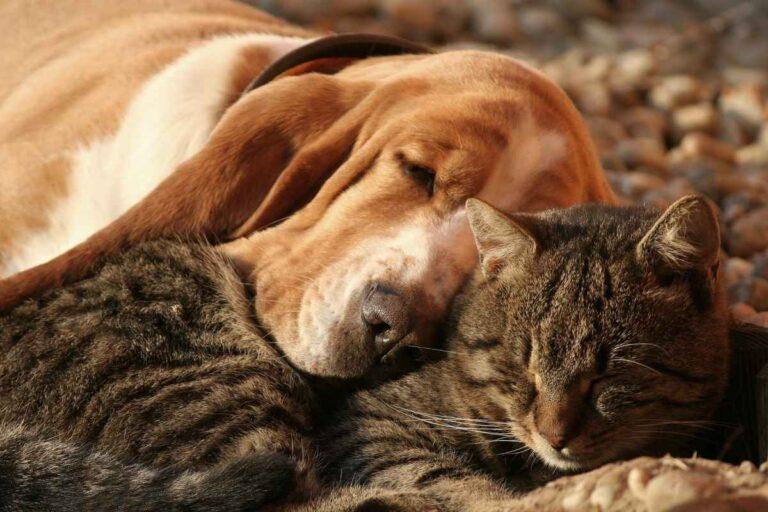 5 razones por las que algunas personas prefieren los gatos en lugar de los perros