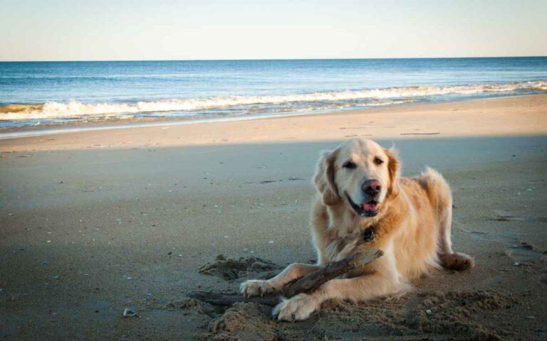 Llevando a tu perro a la playa