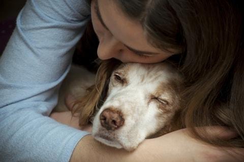 1593405081 814 ¿Como cuidar a un perro anciano