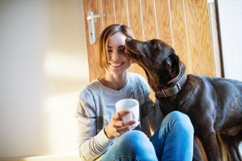 1593563936 841 5 razones para adoptar un perro en un refugio