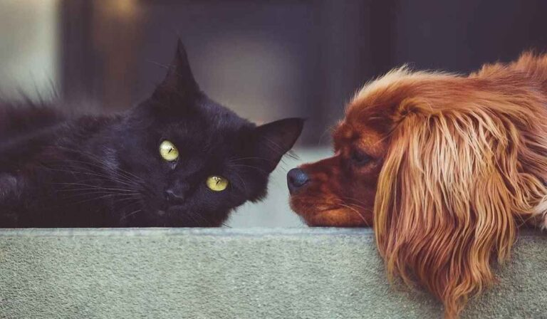 Como hacer que un gato viva tranquilamente junto a un perro