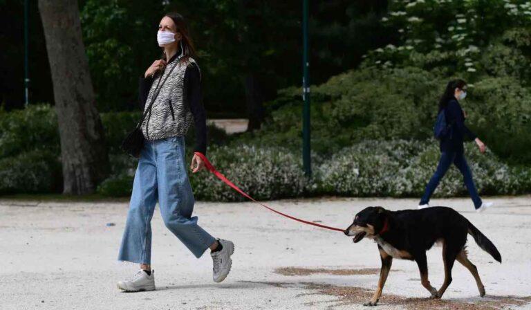 Cómo lidiar con la pandemia siendo un cuidador de animales