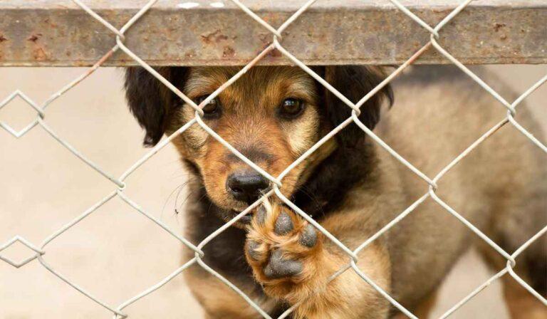 5 razones para adoptar un perro en un refugio