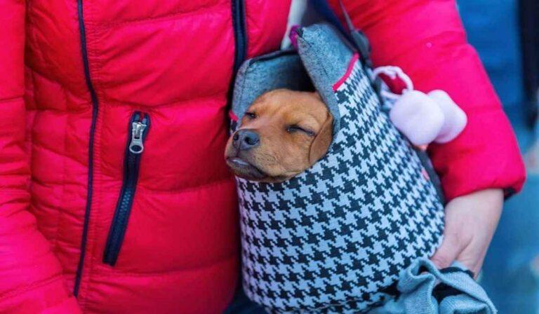 Beneficios importantes de usar un transportador de mascotas