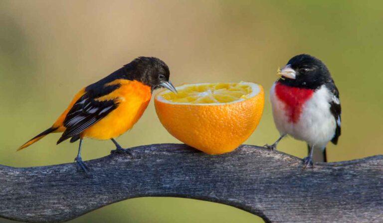 ¿Que comen los pájaros pequeños?