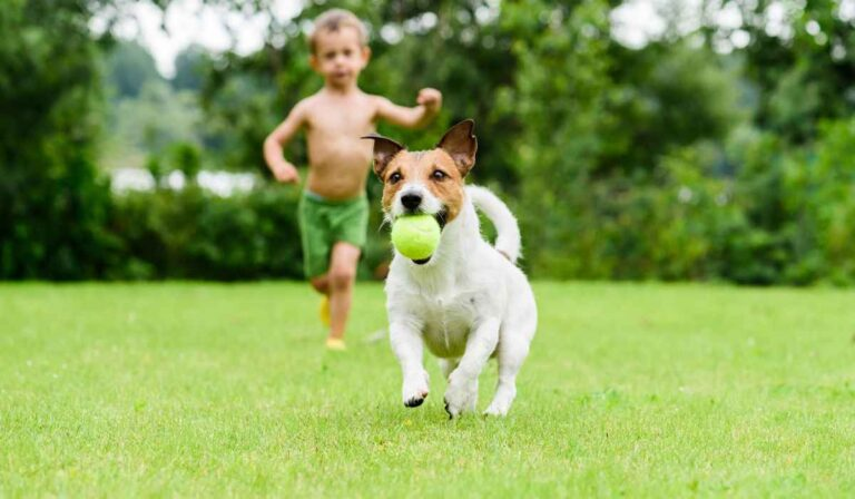 ¿Por qué tener mascotas es bueno para los niños?