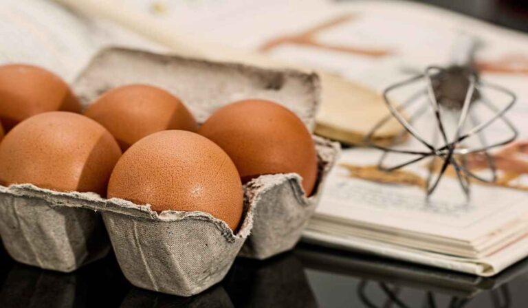 ¿Son los huevos beneficiosos para los animales?
