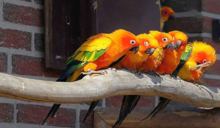 El costo de comprar y cuidar un pájaro como mascota