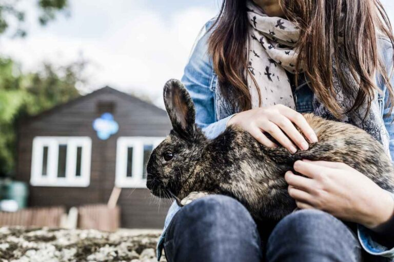Cómo mantener limpia su casa con mascotas de interior
