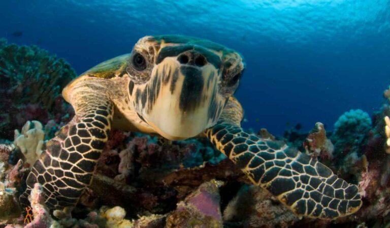 ¿Cuánto tiempo viven las tortugas?