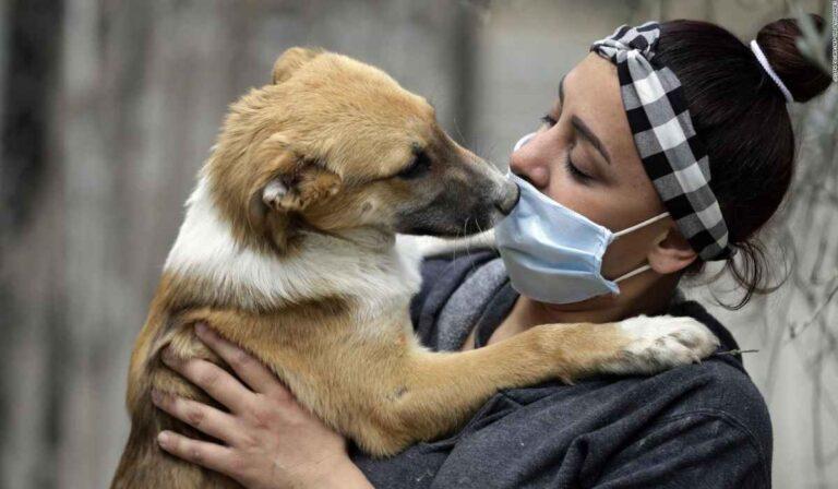 ¿Pueden las mascotas ser infectadas y transmitir el Covid-19 a los humanos?