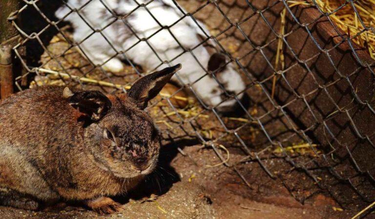 Las enfermedades más comunes de los conejos