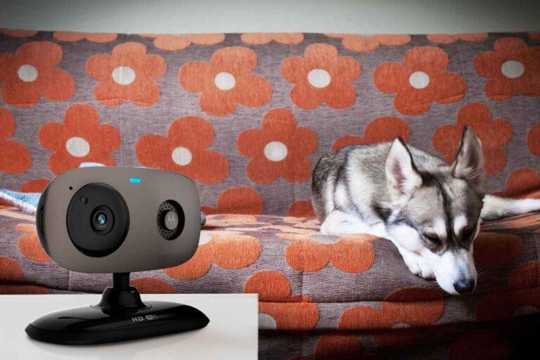3 buenas razones para utilizar una cámara de vigilancia para tu mascota.