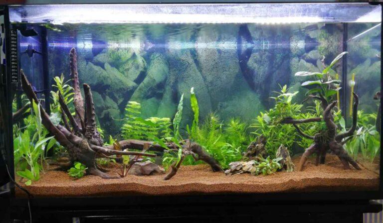 ¿Qué causa el pH alto en un acuario?
