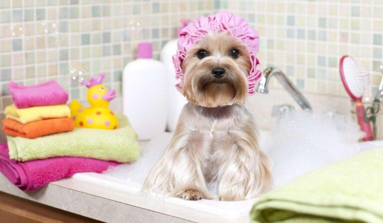 Los mejores consejos para bañar a su perro