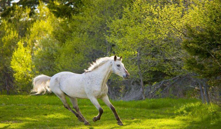 Los caballos y las quemaduras solares o la fotosensibilidad